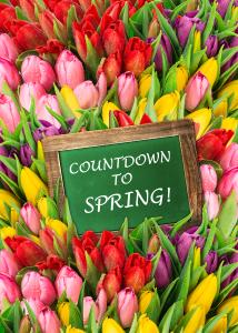 Countdown Tulips web